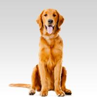 Dog trainer -JOSE